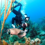 Diving with a Porcupinefish