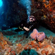 Azure Sponge Diving in the British Virgin Islands