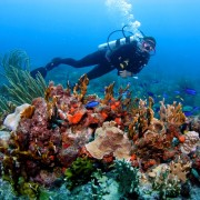 Diving in the BVI from Pacific Wave
