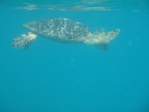 Turtle Diamond Reef - Great Camanoe Island BVI