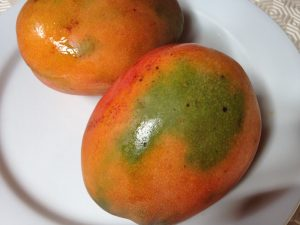 The best mangoes in the Caribbean found on Dominica