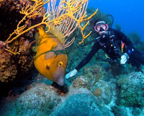 Lynn Griffiths with a White Spotted Filefish