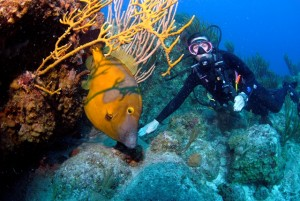 Diving with a White Spotted Filefish