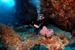 Azure Sponge Diving in the British Virgin Islands