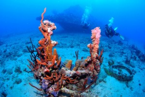Diving the Wreck of the Rhone