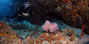 Diving from SY Pacific Wave in the BVI