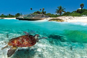Swimming with Turtles in the Caribbean from SY Pacific Wave