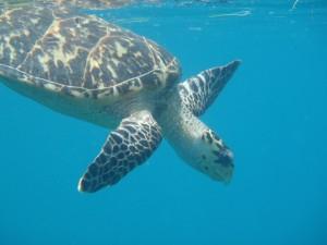 Turtle Diamond Reef BVI