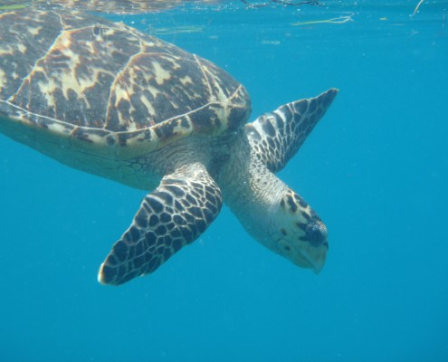 Turtle Diamond Reef BVI