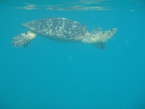 Turtle Diamond Reef - Great Camanoe Island BVI